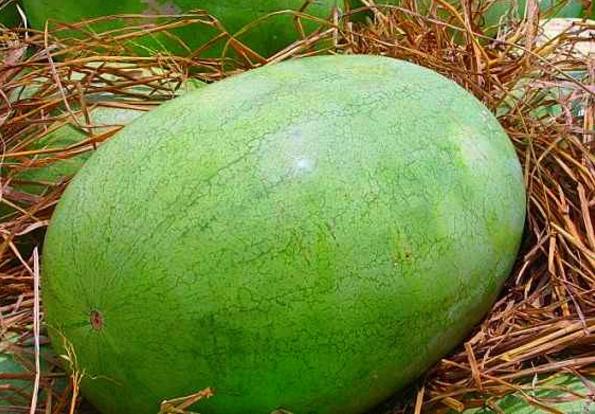 大兴农品,西瓜品种和图片.png