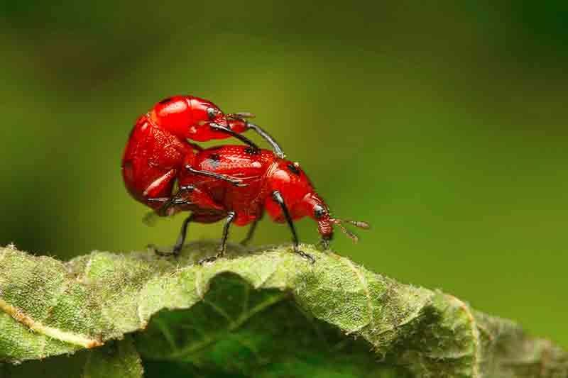 自然年轮昆虫馆,真昆虫来袭!仅需99元,与神奇动物来一次近距离接触.jpg