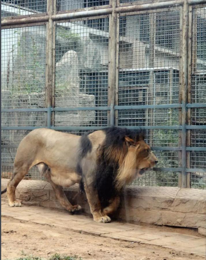 济南动物园电子导览系统,电子语音讲解系统上线.png
