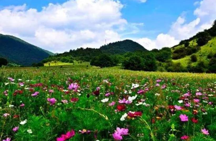 2021年重庆4A景区红池坝国家森林公园手绘地图,电子导览,语音讲解系统上线.png